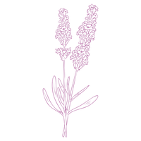 Lavender Illustration.png