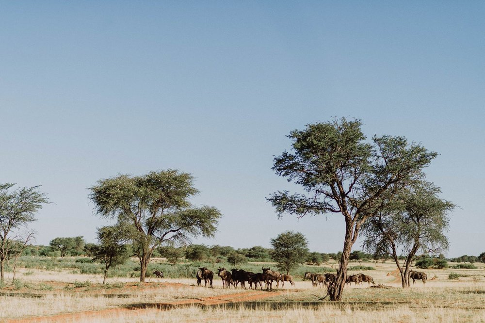 heiraten-in-namibia-7897.jpg