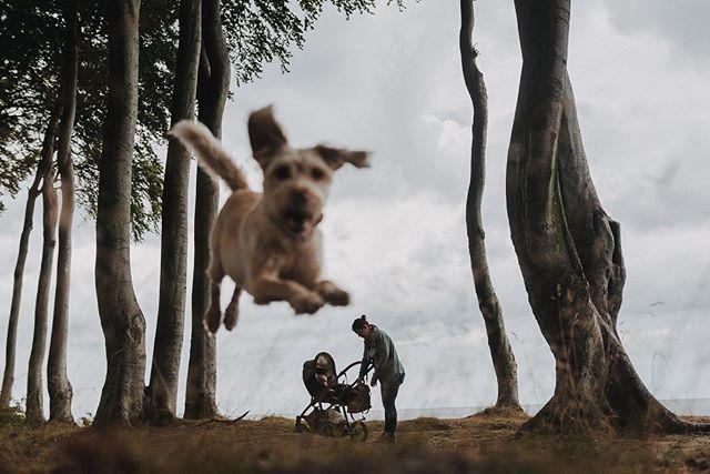 Family Affairs Familienausflug an die Ostsee. Hund und Kind lüften im Sommer 2018.  #flyingdog #dog #nichtohnemich #gespensterwald #ostsee #family #photobomb #ohjoy #heiligendamm