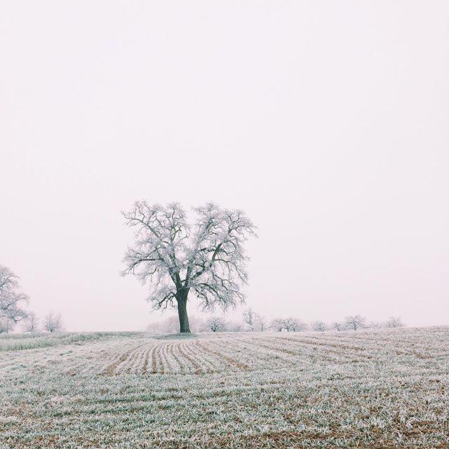 Am letzen Tag des Jahres zeigt sich die Landschaft nochmal so, wie ich sie zur Zeit am liebsten sehe: im zarten weißen Kristall-Kleid 😍 wir haben einen letzten Spaziergang in 2016 unternommen und entspannen nun noch auf dem Sofa bis es zu unserem Abendessen geht. Ich wünsche euch einen guten Rutsch ins neue Jahr! Auf dass 2017 so wird, wie ihr es euch erträumt 🎆 #gutenrutsch #byebye2016 #duwarstgutzuuns #wirfreuenunsauf2017 #winter #spaziergang #neckar #weiss #jahreswechsel #silvester #vsco #iphone5s
