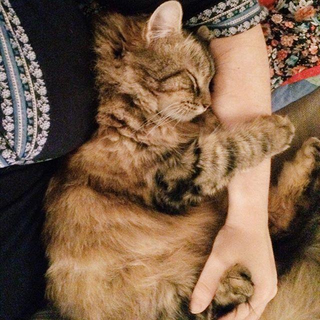 Kalte Tage sind zum Katzenkuscheln da - findet zumindest unsere Plüschhose 😄🐈 wir genießen unsere freie Woche in vollen Zügen 💕 #katze #kater #misterplüschhose #plüschi #katzenkuscheln #babystyle #zuhause #gemütlich #abend #iphone5s #vsco #haustier #mitbewohner #kleinertiger
