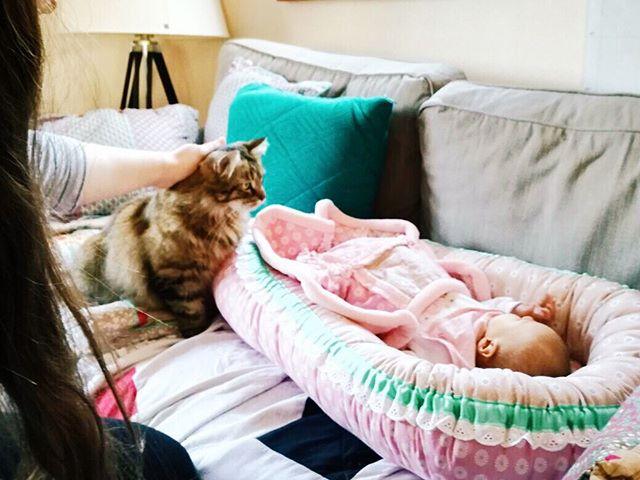 """Unser größtes Glück und der Katzen-""""Bruder"""" 😸 beim ersten Kennenlernen an unserem ersten Tag zuhause. Wir leben uns langsam alle miteinander ein und versuchen unsere Routine zu finden. Morgen ist die Kleine schon eine Woche alt. Einerseits kann ich es nicht fassen, dass schon eine Woche vorbei sein soll, andererseits fühlt es sich so an, als hätte sie schon immer dazu gehört. Ich bin so unendlich dankbar, dass sie bei uns ist 🙏 #babygirl #baby2017 #aprilbaby2017 #victoria #ourprincess #thankful #erstertagzuhause #kater #catsofinstagram #erstestreffen #dankbarfüralles #teamrosa #vsco"""