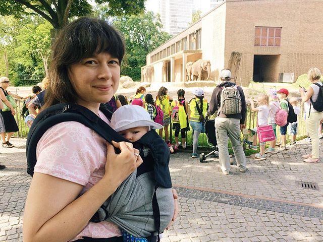 Mit dem Babymädchen im Zoo. Wir genießen Papas einmonatige Elternzeit in vollen Zügen 😊 unsere kleine Entdeckerin ist super neugierig und auch wenn sie natürlich noch keine Ahnung von Elefanten und Co. hat, macht es uns sehr viel Spaß die Welt zu zeigen  #baby #babygirl #unterwegs #15wochen #zoo #emeibabycarrier #tragenistliebe #tragebaby #teamrosa #motherhood #mama #meineinundalles #babyaufentdeckungstour #emeibabylove