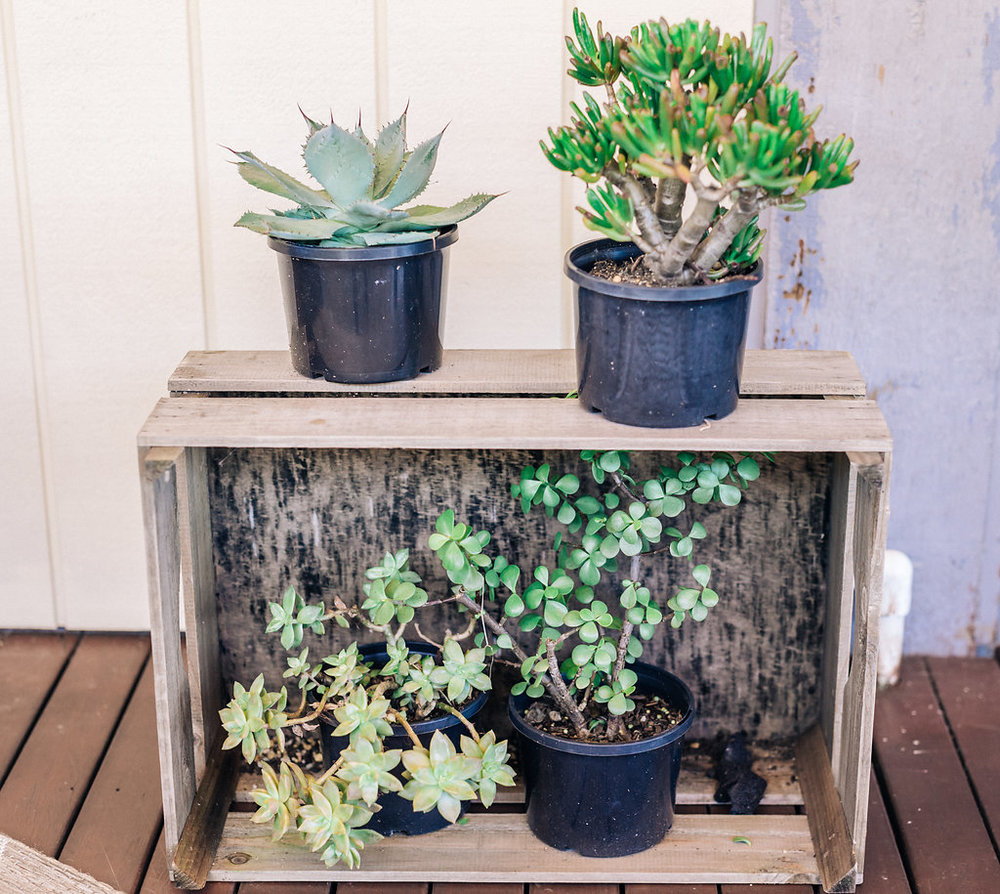Crate-Plants-Prop-Styling-Hire-Northern-Beaches.jpg