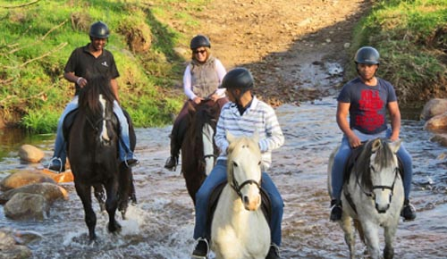 Horseriding on Boschendal Trails
