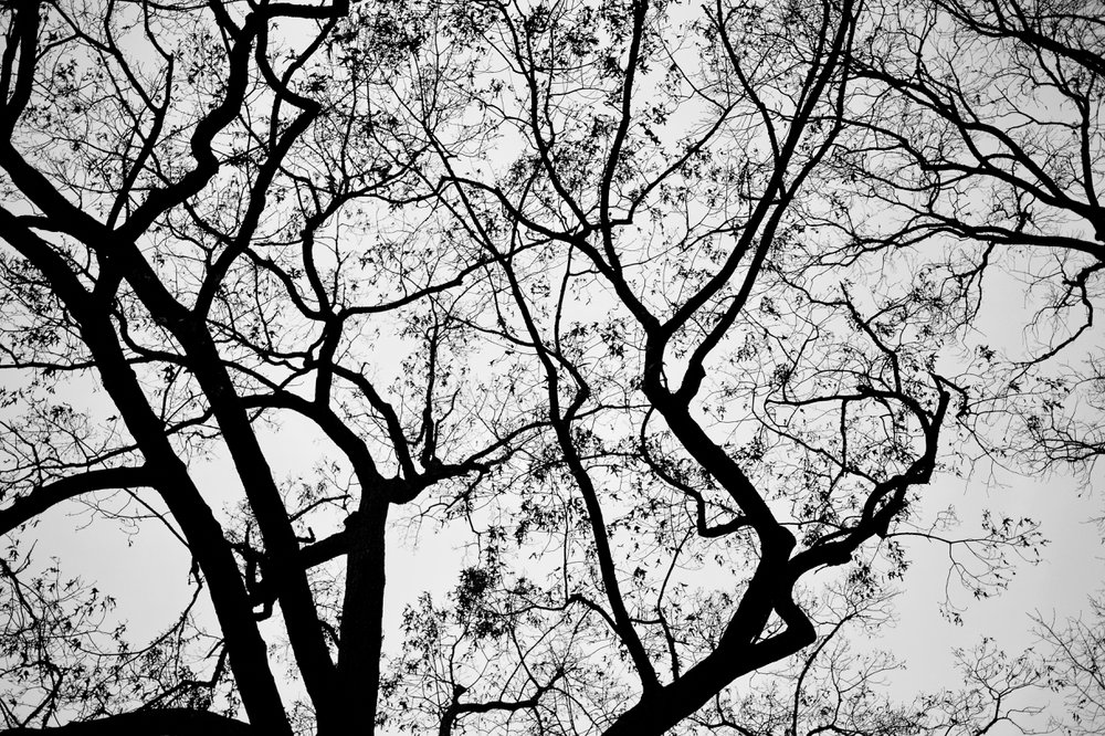 TreesinSilhouette.jpg