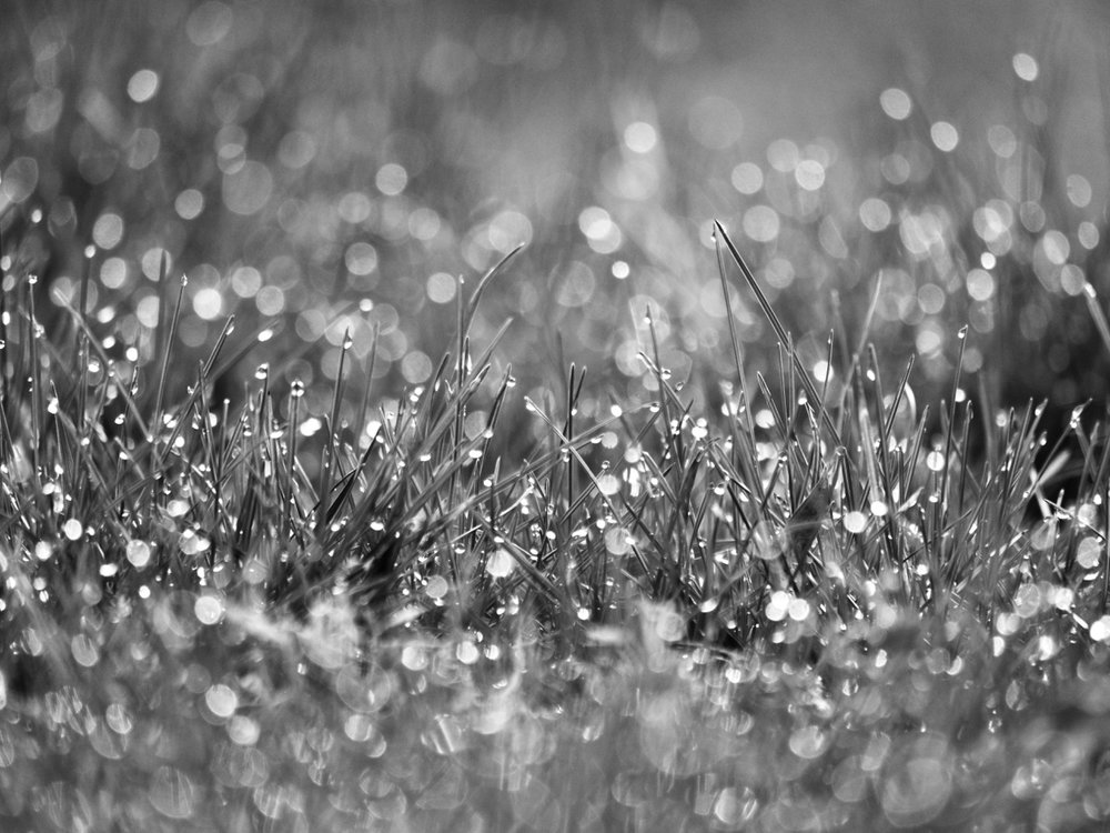 DropletsandBlades.jpg