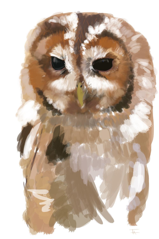 Tawny Owl_2048.jpg