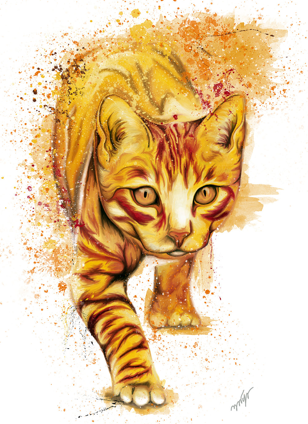 Chat jaune.jpg