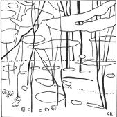 Bluebells in Ploughman Wood (thumb).jpg