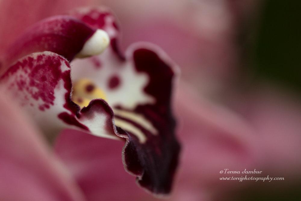 Kew Orchids-17.jpg