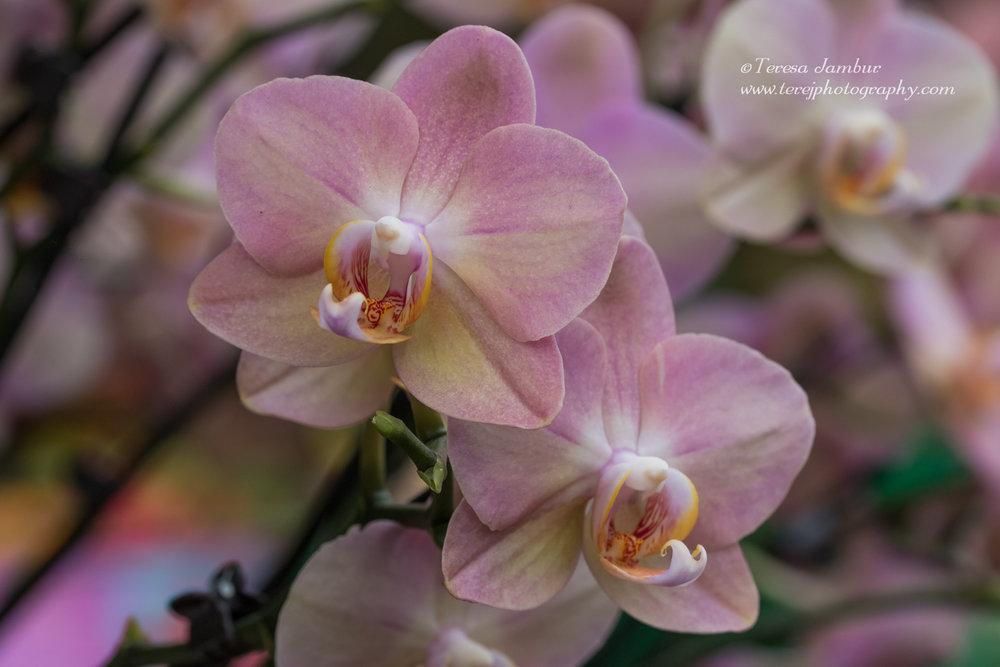Kew Orchids-1-6.jpg