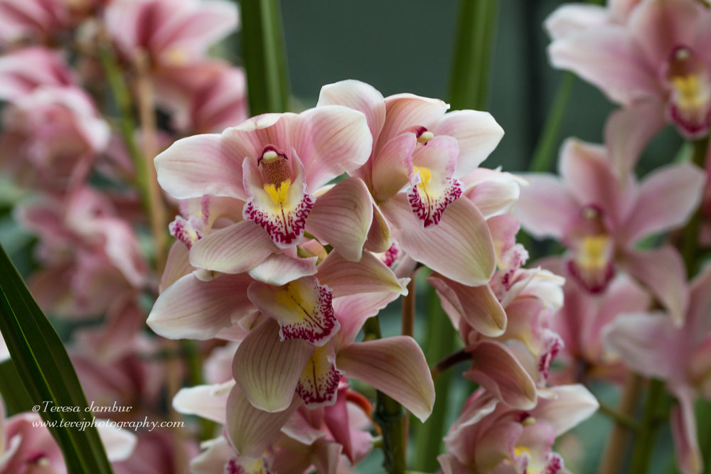 Kew Orchids-4-2.jpg