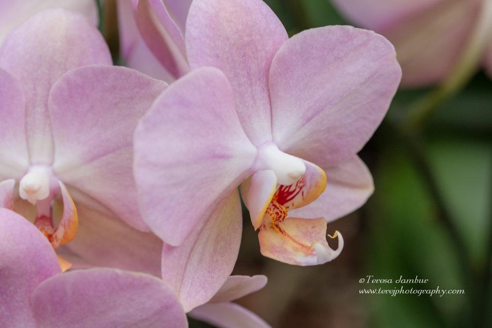 Kew Orchids-27.jpg