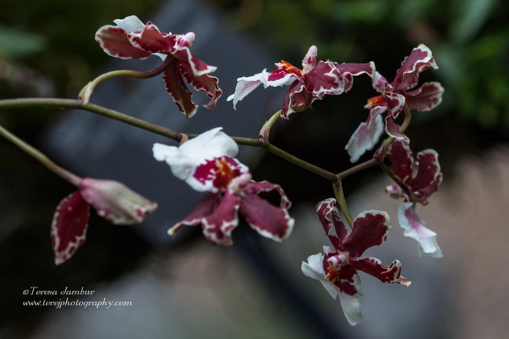 Kew Orchids-3-2.jpg