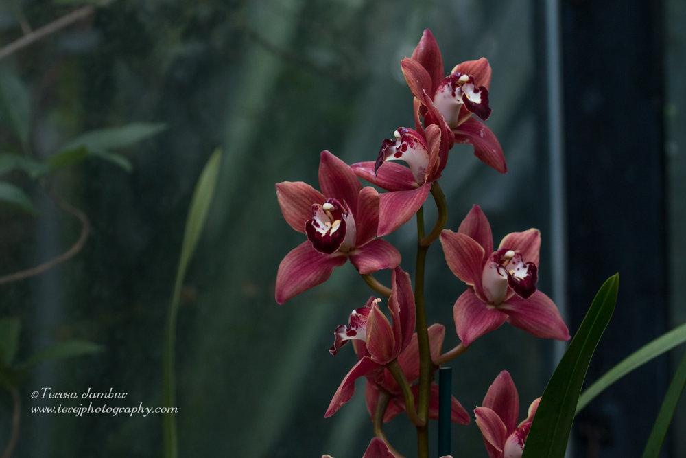 Kew Orchids-2-3.jpg