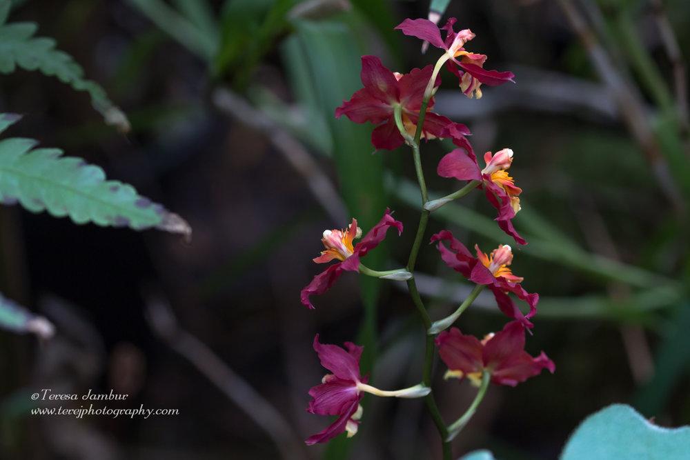 Kew Orchids-6-2.jpg