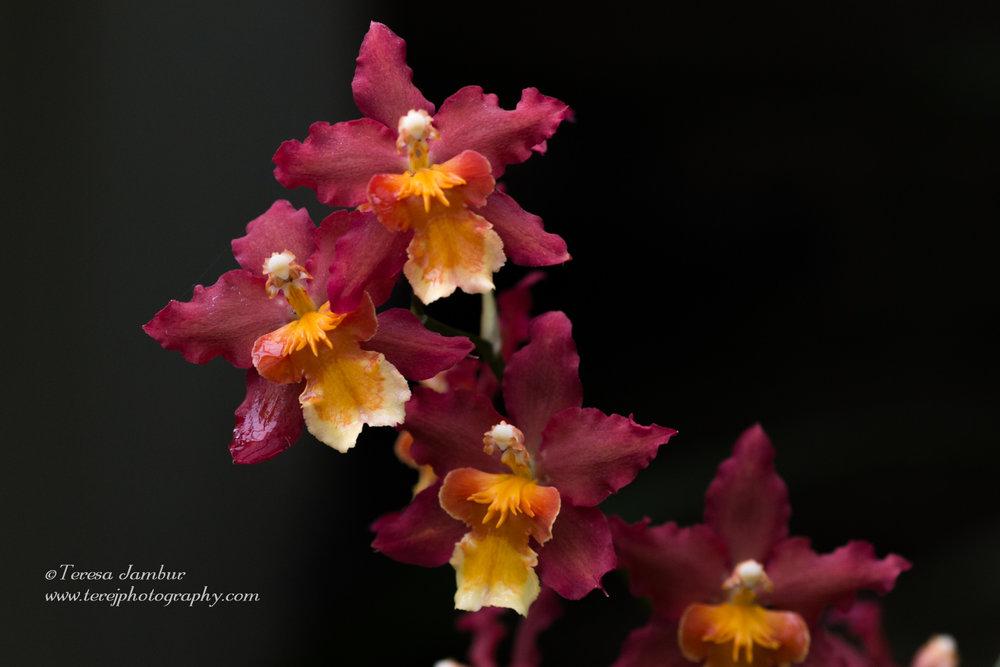Kew Orchids-7-2.jpg