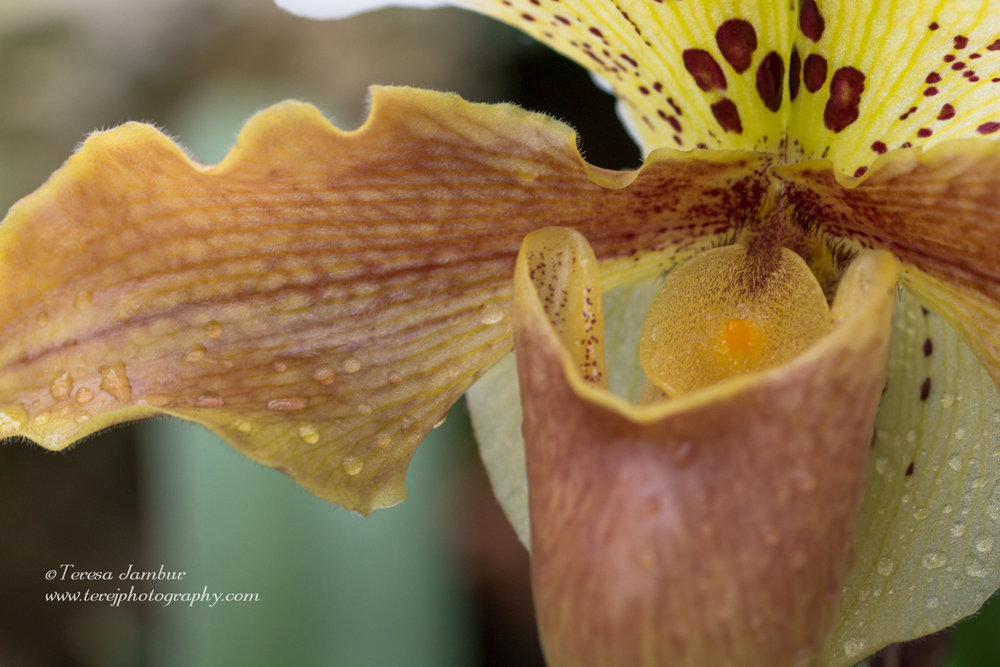 Kew Orchids-1-4.jpg