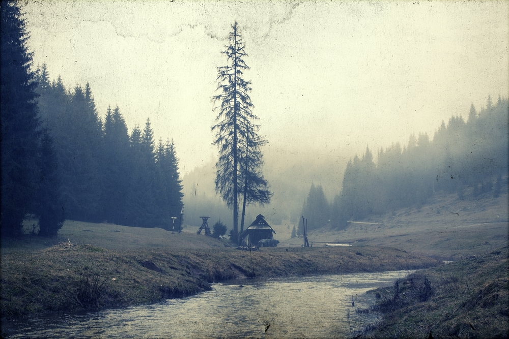 Bleak Fall