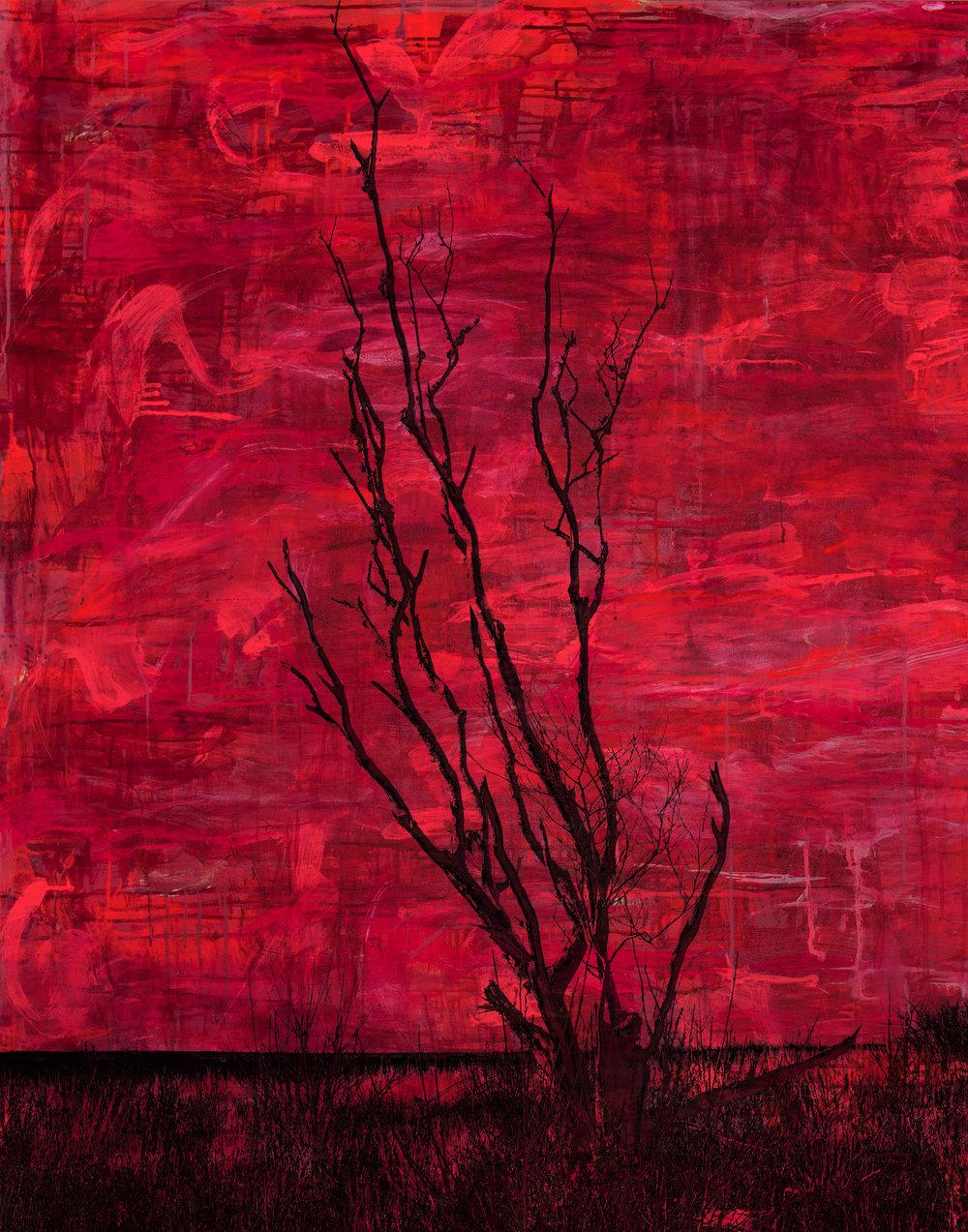 Red Pine Nantucket Series