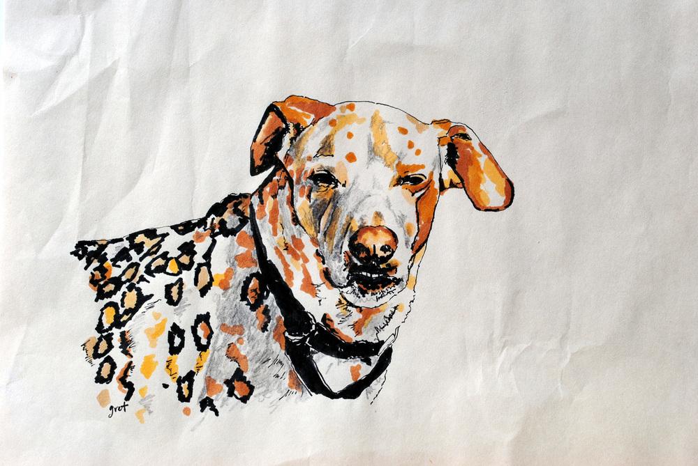 The Wonderdog    (2011)