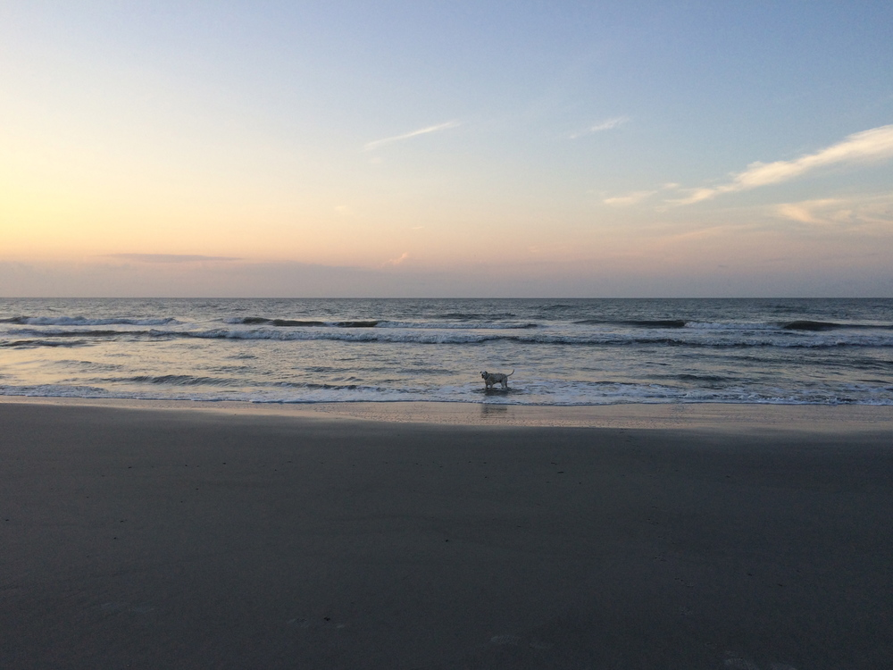Sunrise swims with Lou at Folly.
