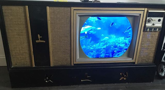 My genius boyfriend retrofitted this 1960's TV console with a flatscreen tv that we can stream hours of aquarium video on. 🐠🐟🐡🐬🐊