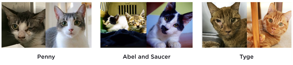 These are before and after pictures of some of the cats we have saved. Thank you for giving them a second chance in life!