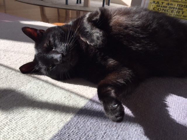 Jasper enjoying all the comforts of his Cat Town Foster Home