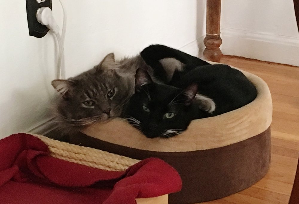 Puck and Lowell, comfy and cozy in their home.
