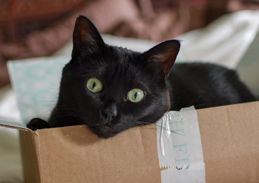 jura-black-cat-cattown-foster-box