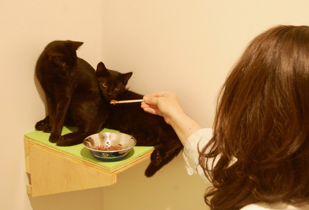 Tofu, left, and Six, right, get rewarded with food for entertaining two visitors.Photo by Cathy Niland.