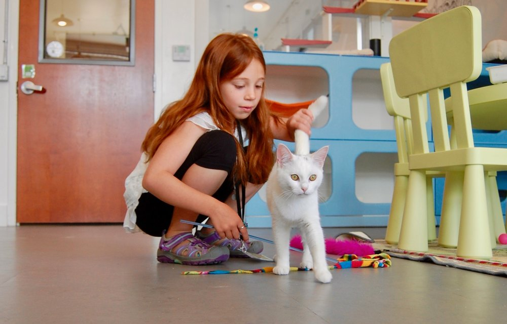 kids_cats_cattown_adopt.jpg
