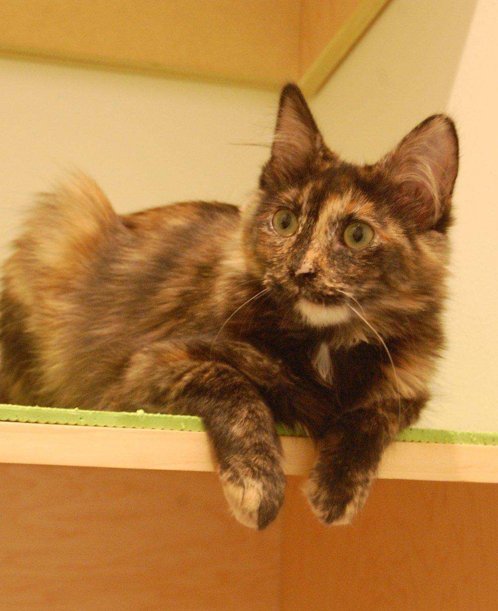 TULSA Adopted 9/17