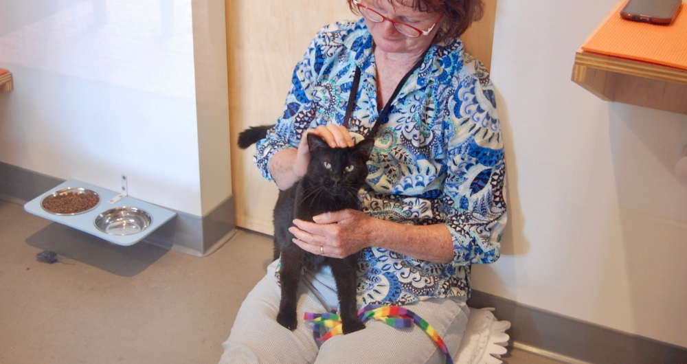 Darcy enjoying some lap time with volunteer, Shelly.