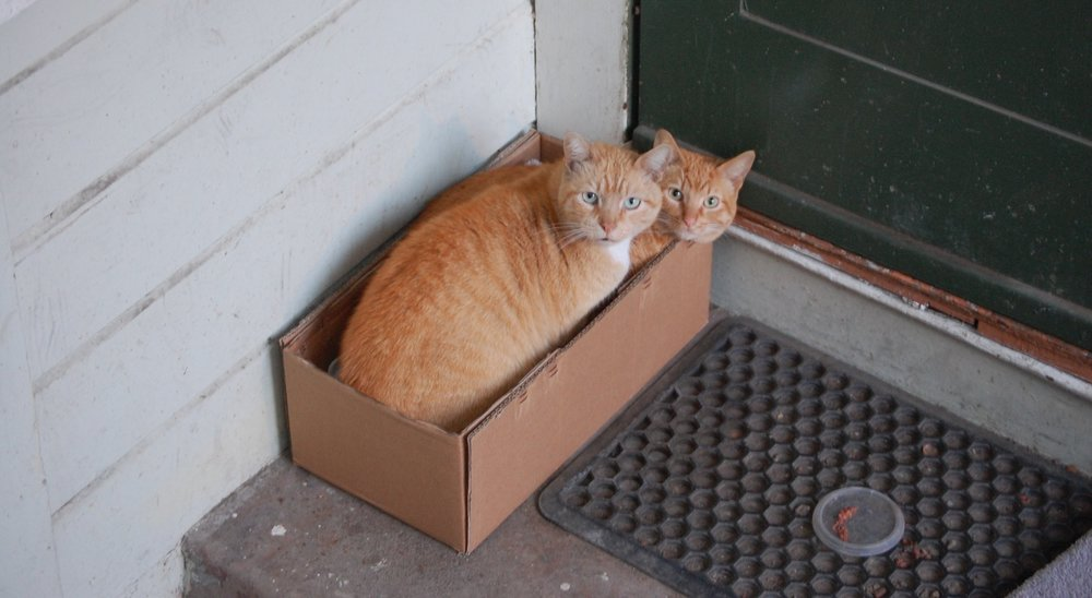 Two feral cats cuddle up in a make-shift bed outside the home where they're fed.