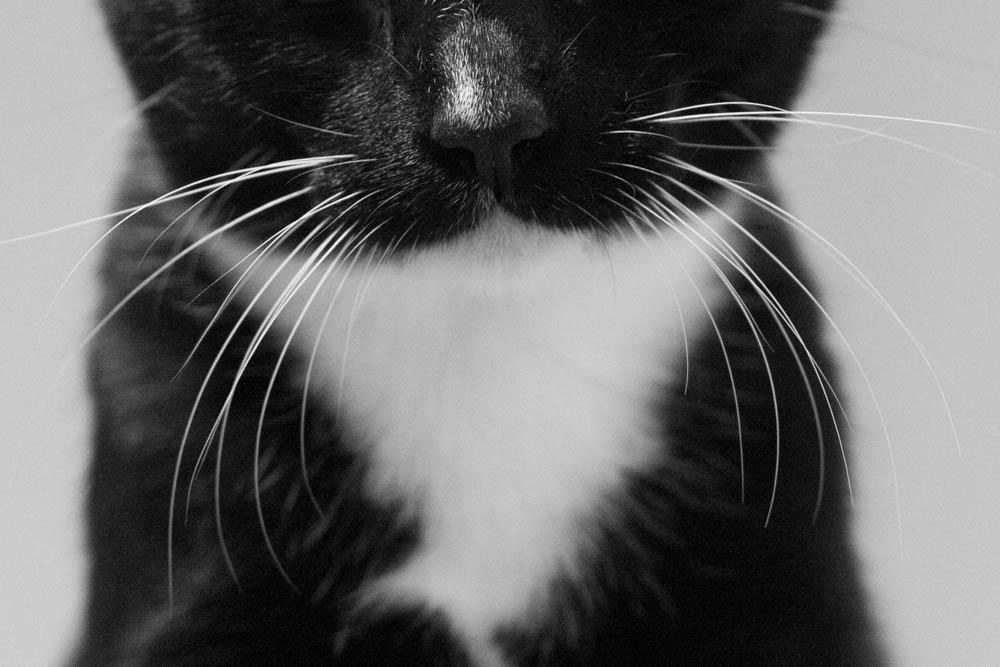 isadora forgotten kitten fkp kitten wire cat town.jpg