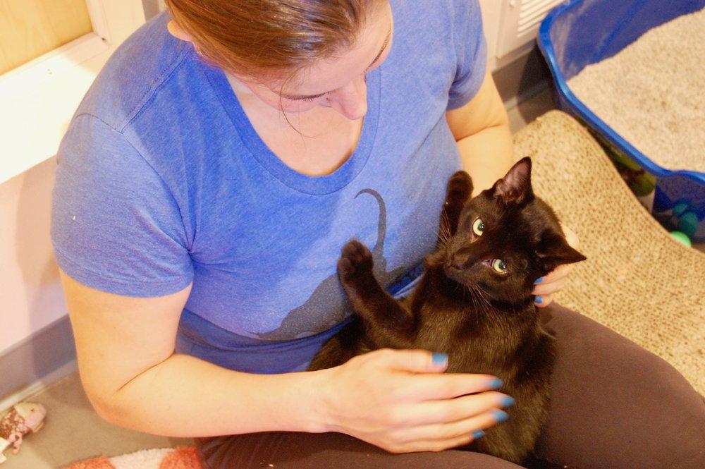tofu kitten wire cat town fkp black cat.jpg