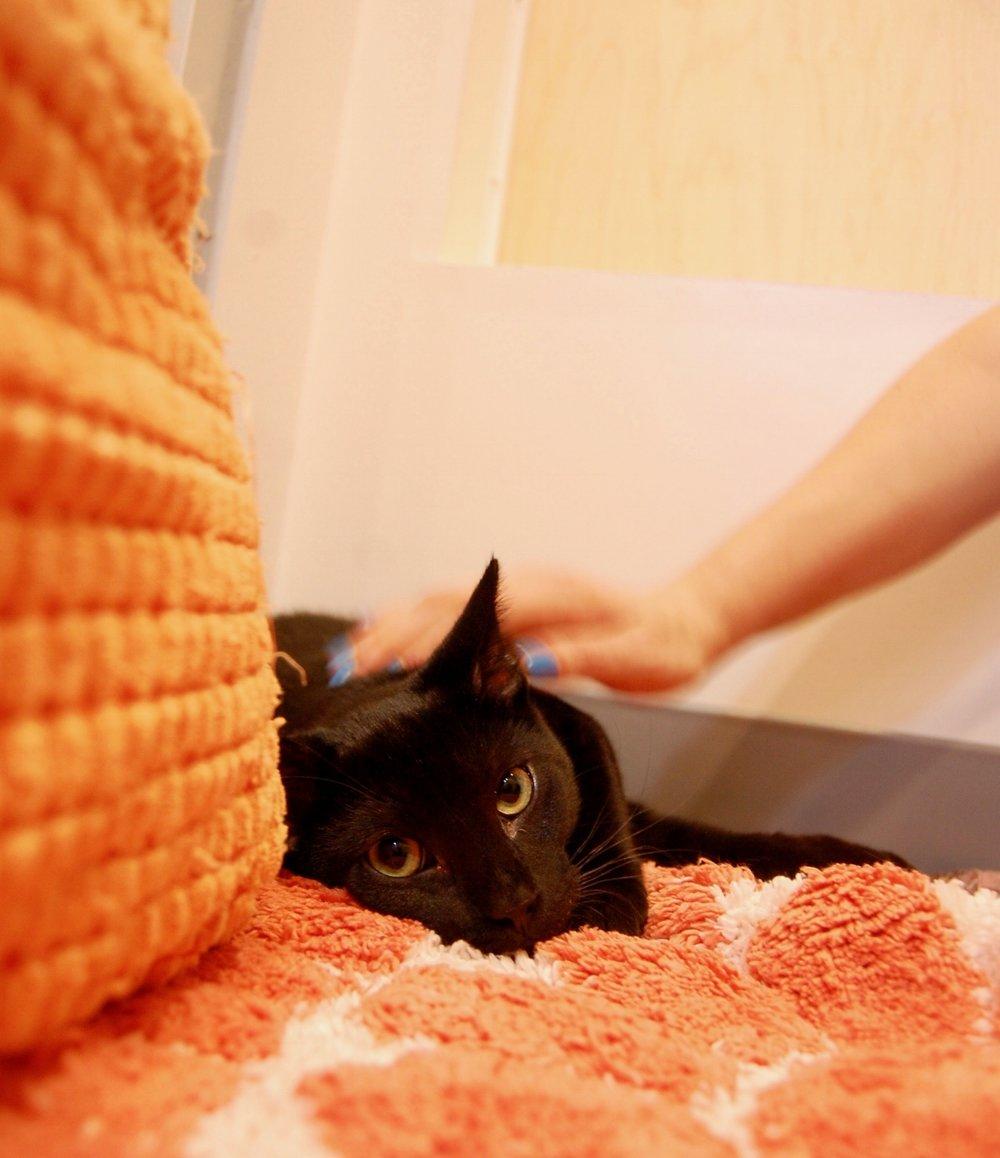 Tofu fkp forgotten kitten project kitten wire cat town.jpg