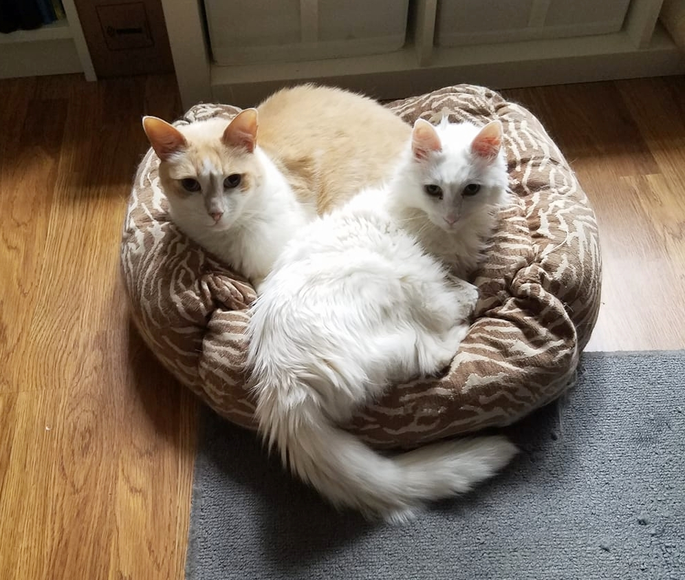 Emmett and Fletcher (Foster Fail), adopted July 2017
