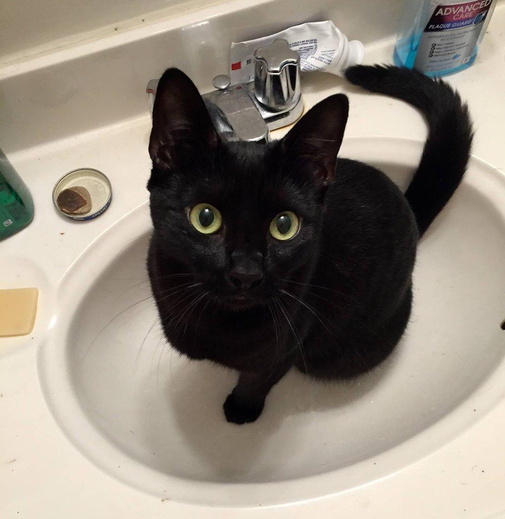 Peanut, adopted February 2016