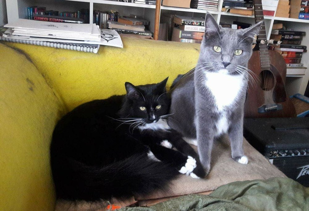 Sansa and Arya, adopted December 2015