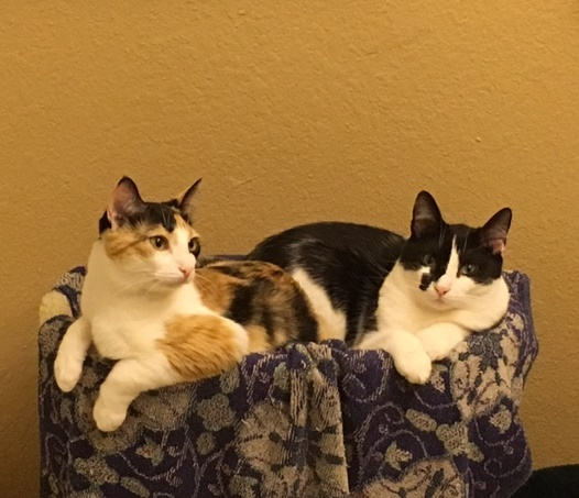 Sophia (FKA Tulip) and Jack, adopted September 2017