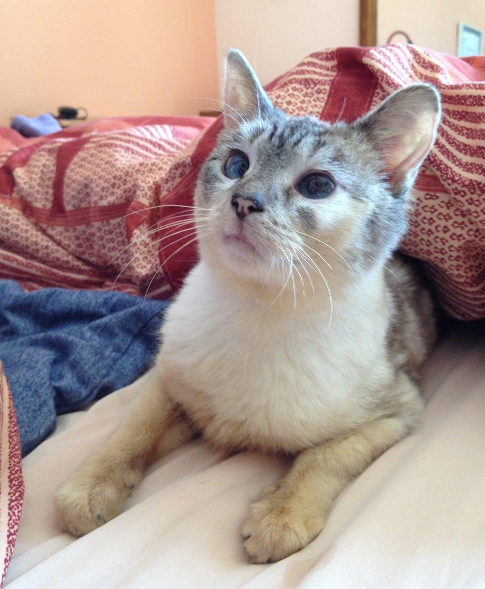 Doris, one of the seniors Michaela has fostered through Cat Town.