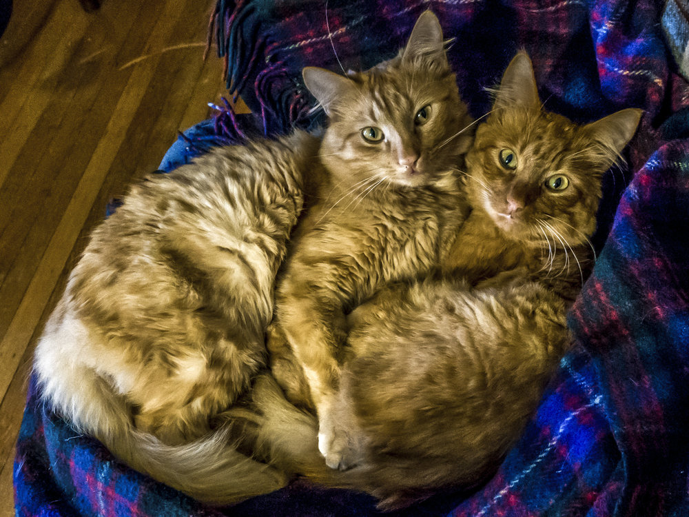 PHINEAS AND FERB, 2 YEARS, MALES, BONDED PAIR