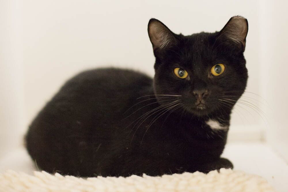 BETSY, 6 MONTHS, FEMALE, BONDED WITH BABETTE