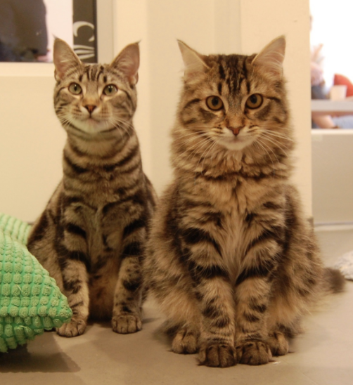 TIEDYE AND SEQUIN, MALE AND FEMALE, 6 MONTHS, BONDED PAIR