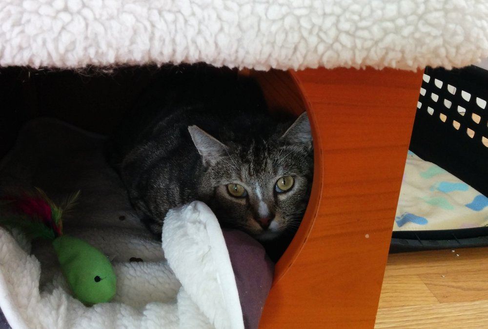 Briggs, tucked away in the early days of fostering. Photo courtesy of Loraine McVey.