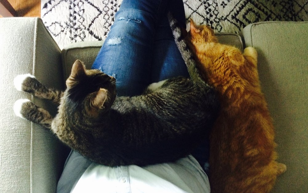 Leo, Bella, and Ginny sharing a moment on the couch. Photo by Ginny L.